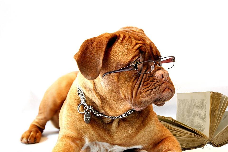 Dog wearing glasses and reading a book